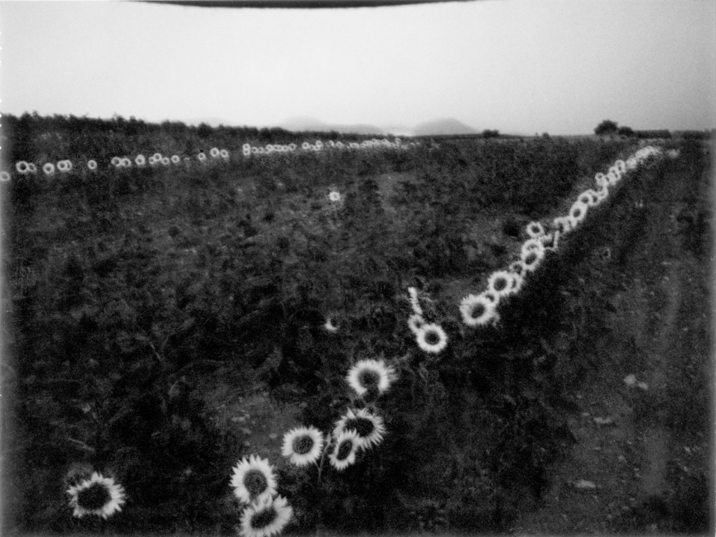 scan black sunflowers 2001-Modifier-Modifier-Modifier